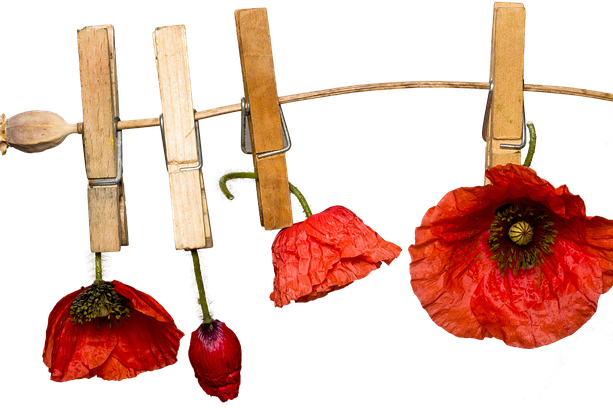 poppies-on-linen-3730465_640.png