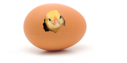 baby-chicken-in-egg2 (1).png