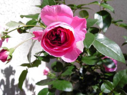 Valentinstag Fur Alle Blogs Im Seniorentreff