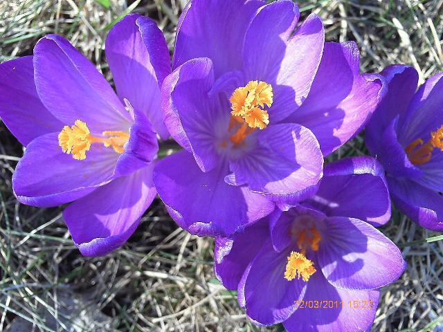 Monatsgedicht März Blogs Im Seniorentreff
