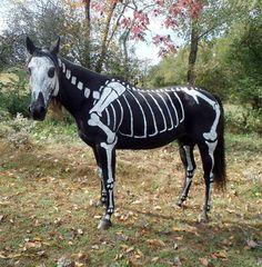 7df6c66e981588530f7e40f830833a2a--animal-halloween-costumes-skeleton-costumes.jpg