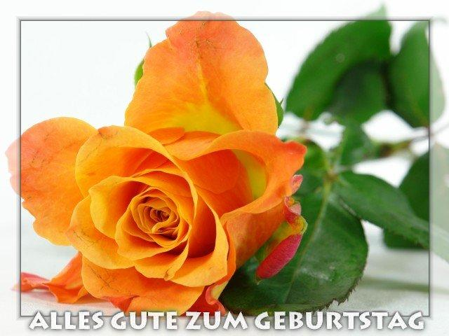 bilder-s-08-s-0229_06764_orange_rose-t-geburtstag.jpg