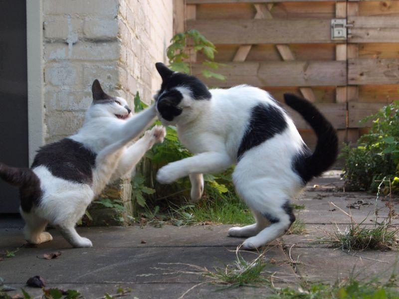 Two_cats_jump_to_playfight.jpg